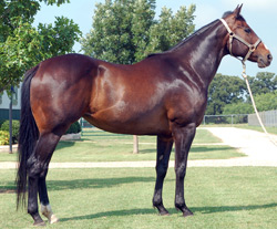 Mistys First Success 2005 Bay Mare